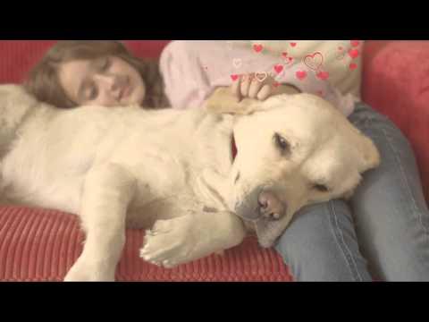 a-ciência-por-trás-da-felicidade™:-hill's™-science-diet™-cão