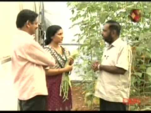 Polyhouse 6 in kerala funnycat tv for Terrace krishi