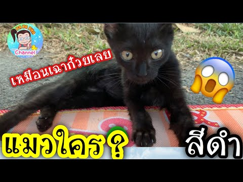 เจอ!! แมวดำ !! เซอร์ไพร์ อีกแล้ว ทำยังไงดี  ??  l By ครอบครัวแว่น