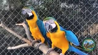Liberación animales silvestres Corpocesar - Prodeco - FHGD