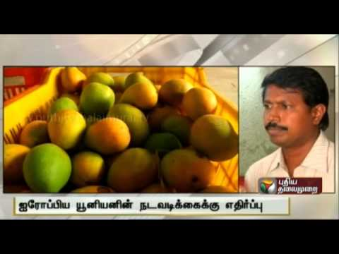 Growing Opposition to EU Ban on Indian Mangoes