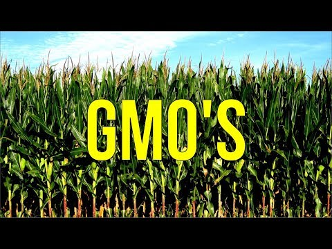 My Thoughts on GMO's