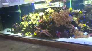 Part 1--Awesome 3000 gallons saltwater aquarium at Miami Science Museum in Florida