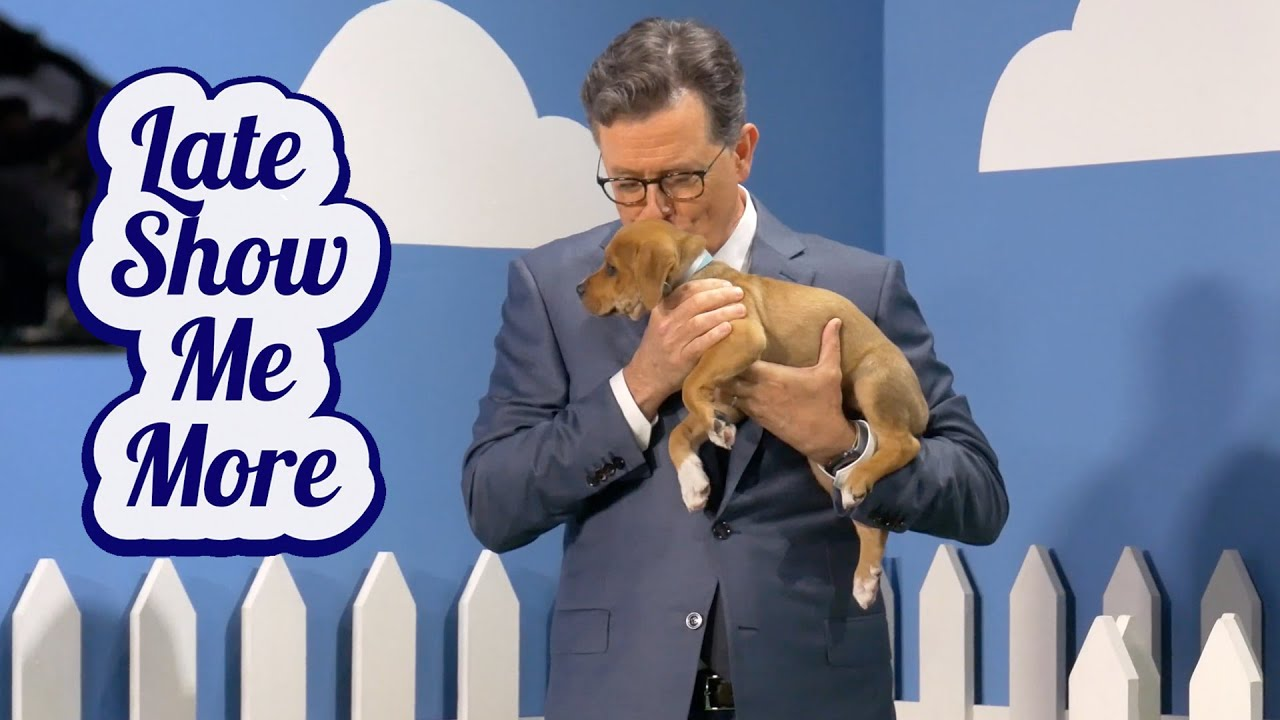 Late Show Me More: Adorableness Plus Puppies
