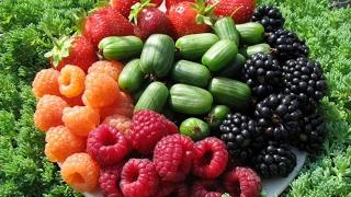 Ягоды - красивые фотографии аппетитных ягод