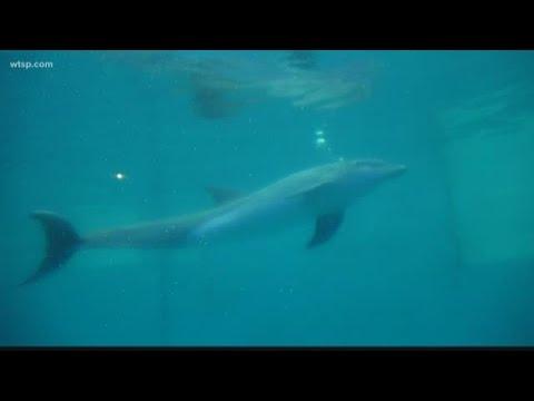 Sarykarmen Rivera  - PJ se queda en el Clearwater Marine Aquarium