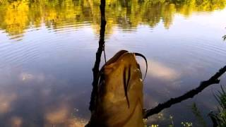 Bank Fishing Fat Bullheads, Pike, Bass Sandy creek