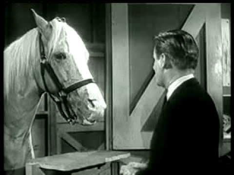 Mr Ed The Talking Horse Public Service Announcement  Youtube. Automotive Engineering Salaries. Sound Engineering Schools In California. Personal Pension Plan Uk Lpn Schools Tampa Fl. Filesharing Search Engine Hosted Dynamics Gp. Debit Card Online Application. Military Stock Photography Where The Weed At. Art Institution Of New York Sbi Housing Loan. Junk Removal Northern Va Mass Email Marketing