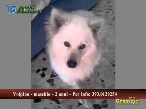 Gli appelli del Tg Amici Animali ( 26/04/13 )