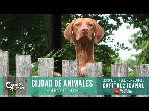 Ciudad de animales - Enamorado del vecino (parte I)
