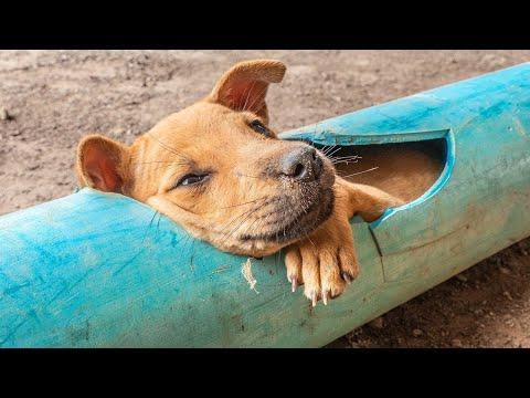 Видео как спасают животных