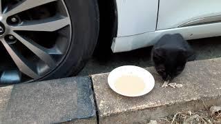 고양이들 오리고기 잘 먹는다 살마서 볶아서 기름빼고 .…