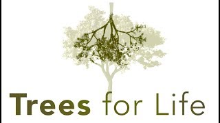 Trees for Life Spiritual Conservation Song Abaqondise Brothers