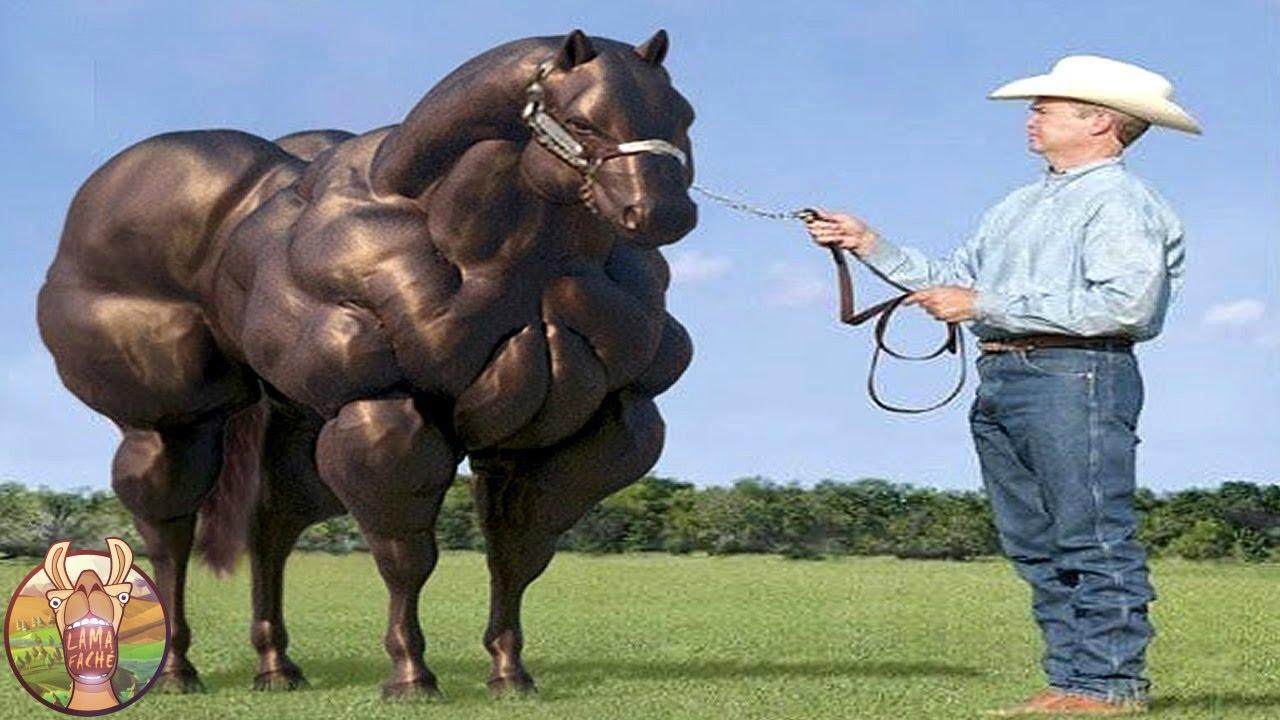 Les 12 races de chevaux les plus incroyables du monde lama fach youtube - Chevaux gratuits ...
