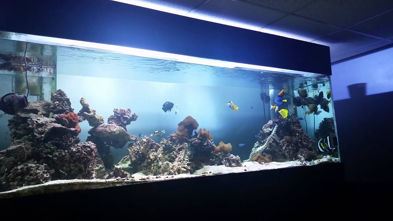 400 gallon saltwater fish tank youtube. Black Bedroom Furniture Sets. Home Design Ideas