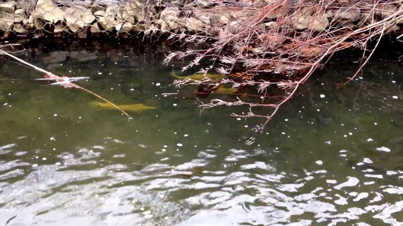 Palomino trout pittsburgh trout fishing youtube for Fishing in pittsburgh