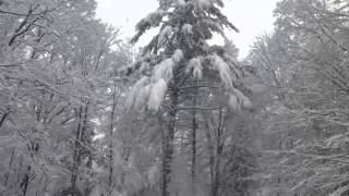 Високосный год - Музыка под снегом