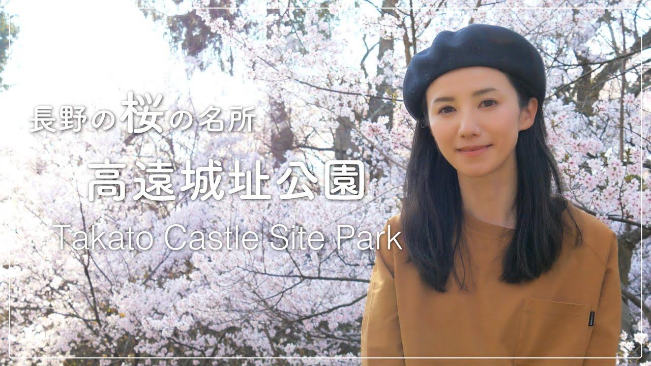 【番外編】満開の高遠城址公園の桜。移住して3度目の春に1人でお花見して来ました。