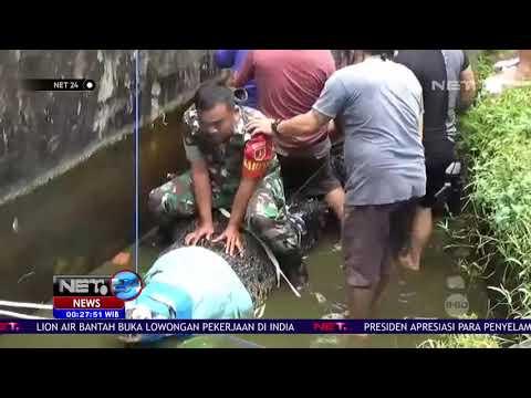 Proses Evakuasi Buaya Pemangsa Warga di Minahasa NET24