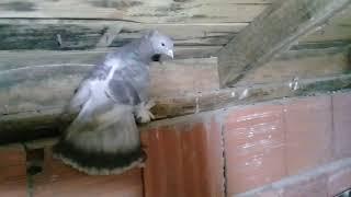 Yeni bir çift kuş aldım 😀