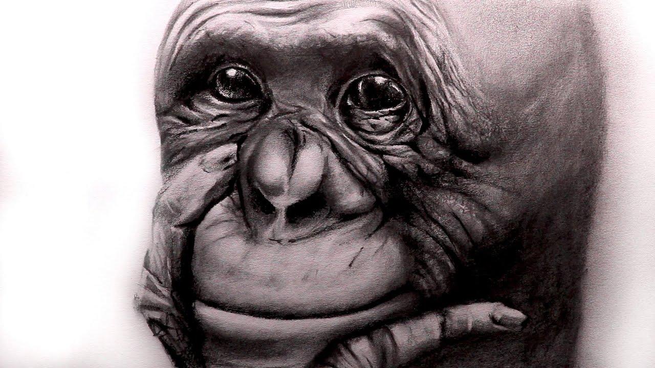 Uncategorized Videos Of Drawing art videos drawing a gorilla youtube gorilla