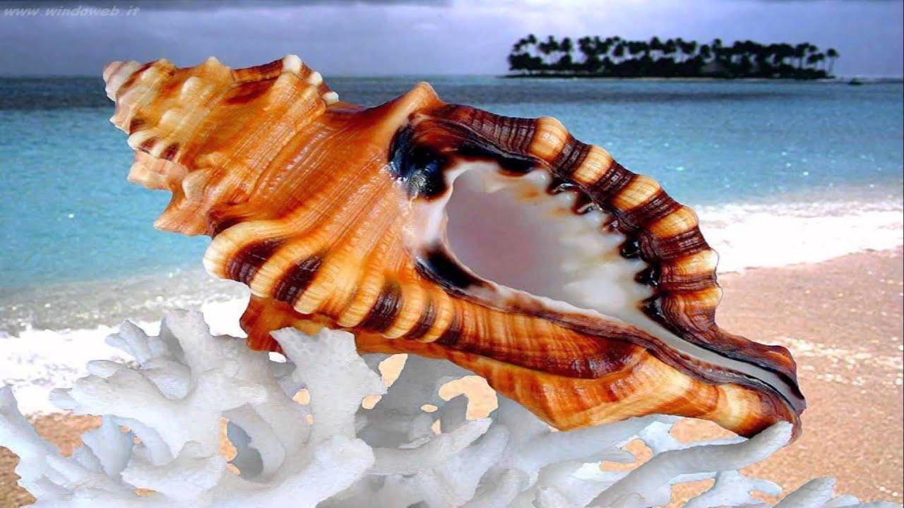 Beautiful shells in the sea (HD1080p) - YouTube