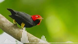 Download Lagu MURAI BATU APAPUN AKAN      LANGSUNG NYAUT NEMBAK NGEROL DENGAR SUARA INI mp3