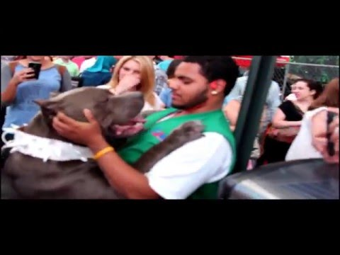 Huge Blue Bully XL Pitbull scares tourists at Times Square :  Beware!
