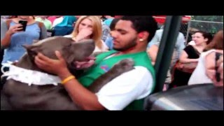 Huge Blue Bully XL Pitbull scares tourists at Times Square :  Beware!(BGKs New York the huge blue XL bully pitbull puppy visits Times Square in New York City and makes many new friends, Big Gemini Kennels produced this ..., 2015-08-23T19:48:05.000Z)
