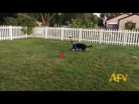 Alexander Jacobson collides with dog