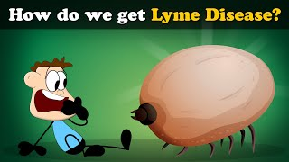 How do we get Lyme Disease? | #aumsum