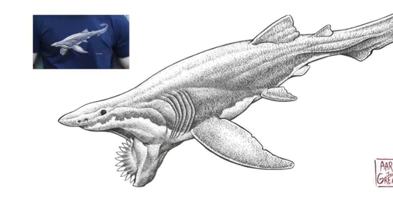 Paleo Shark T shirt Design From Cotton Crustacean YouTube