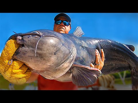 Turning Small Catfish Bait Into Big Catfish Bait