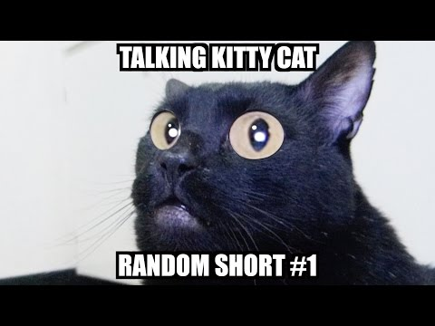 Thumbnail: Talking Kitty - Random Short #1