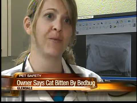Woman Says Her Cat Was Bitten By Bedbugs At A Valley Hotel