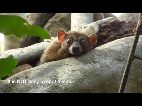 Visit Madagascar: Ankarana National Park and Market Day