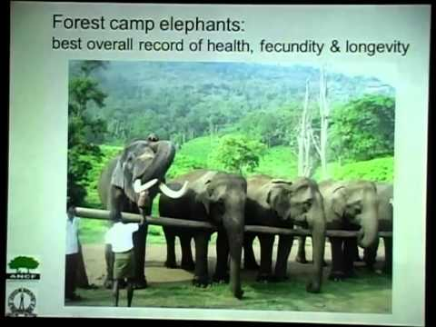 The Asian Elephant's Conservation Conundrums