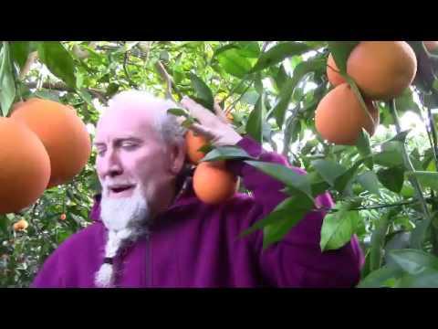 Le arance arrivano dalla Sicilia con un click from YouTube · Duration:  4 minutes 55 seconds