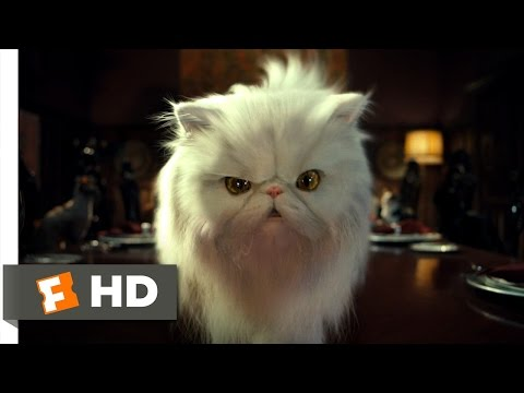 Trailer do filme Because of the Cats