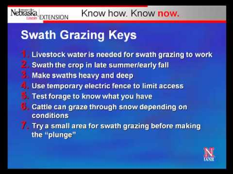 How Windrow Grazing Works in the High Plains Region Part 3