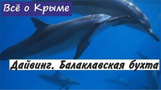 Дайвинг в Крыму. Балаклавская бухта.