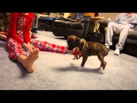 Girl Santa Wallpaper Boxer Puppy Christmas Surprise Youtube