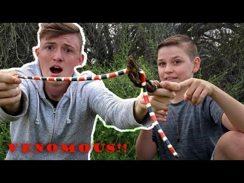 Catching VENOMOUS Snakes! | DO NOT TRY YOURSELF!!