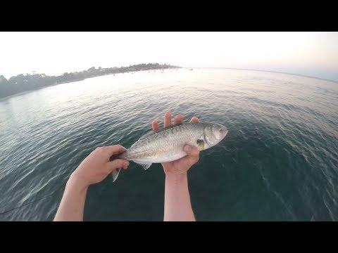 Sorrento Pier Salmon