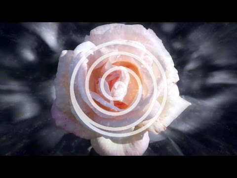 A Sea of Rose Petals - Music For Relaxation, Meditation and Sleeping (PURERELAX.TV)