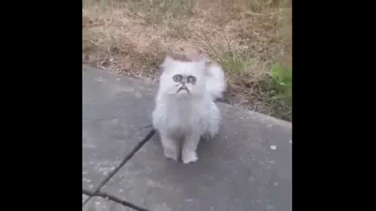 Weird Looking Cat Videos