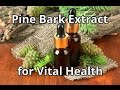 Vital to Male & Female Health - Pine Bark Extract