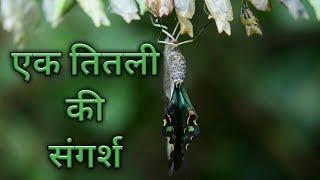 Ek Titli ki sangarsh / एक तितली की संगर्ष /by bharati academy