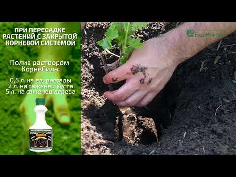 Применение биопрепарата КорнеСил