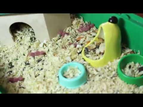 видео: Мандаринка родила!!!